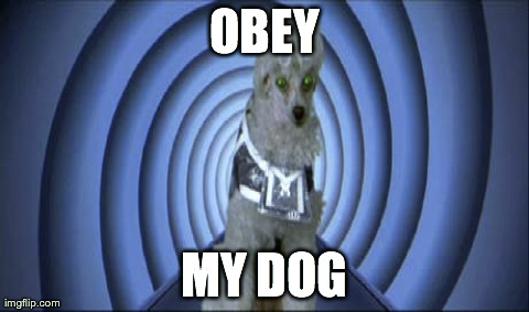Obey the LSAT Dog
